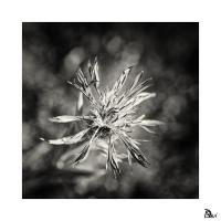 Flore #1