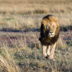 Le Masaï Mara