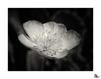 Flore 2
