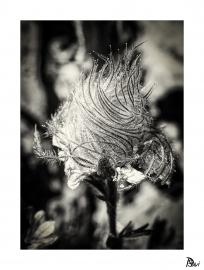 Flore 3