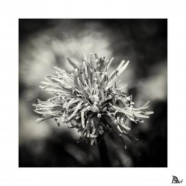 Flore 4
