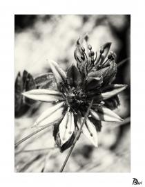 Flore 13