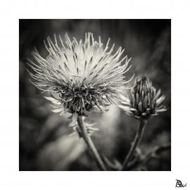 Flore 7