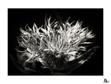 Flore 9