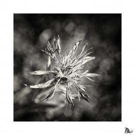 Flore 1