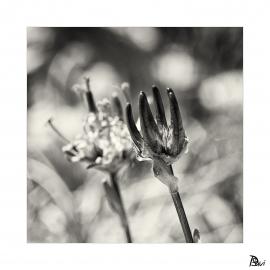 Flore 5