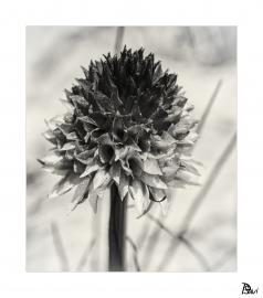 Flore 6