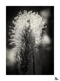 Flore 8