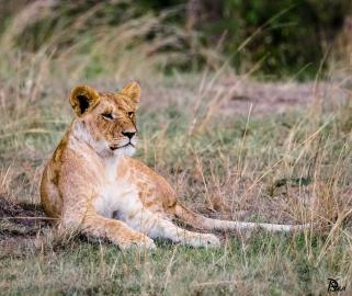 Lionne 2