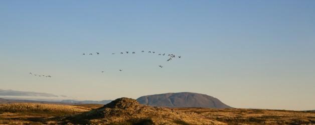 L'Islande – le nord